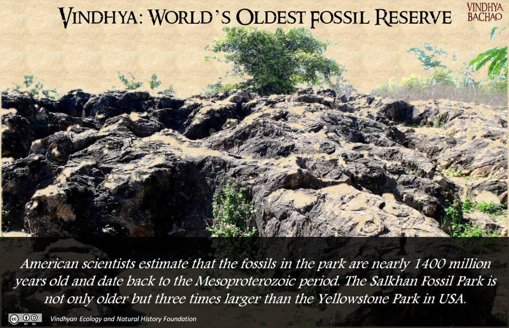 Poster 2: World's Oldest Fossil Reserve