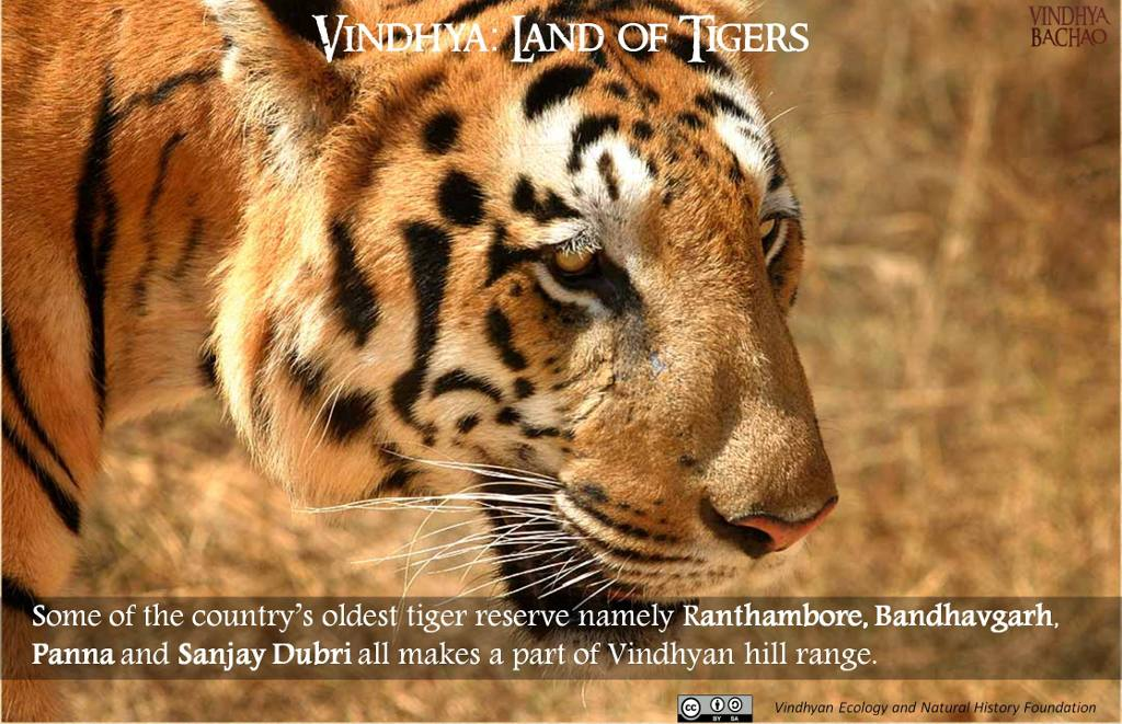 Poster 3: Oldest Tiger Reserves of India
