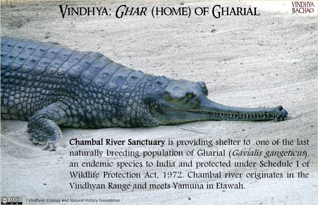 Poster 7: Natural Home of Gharial
