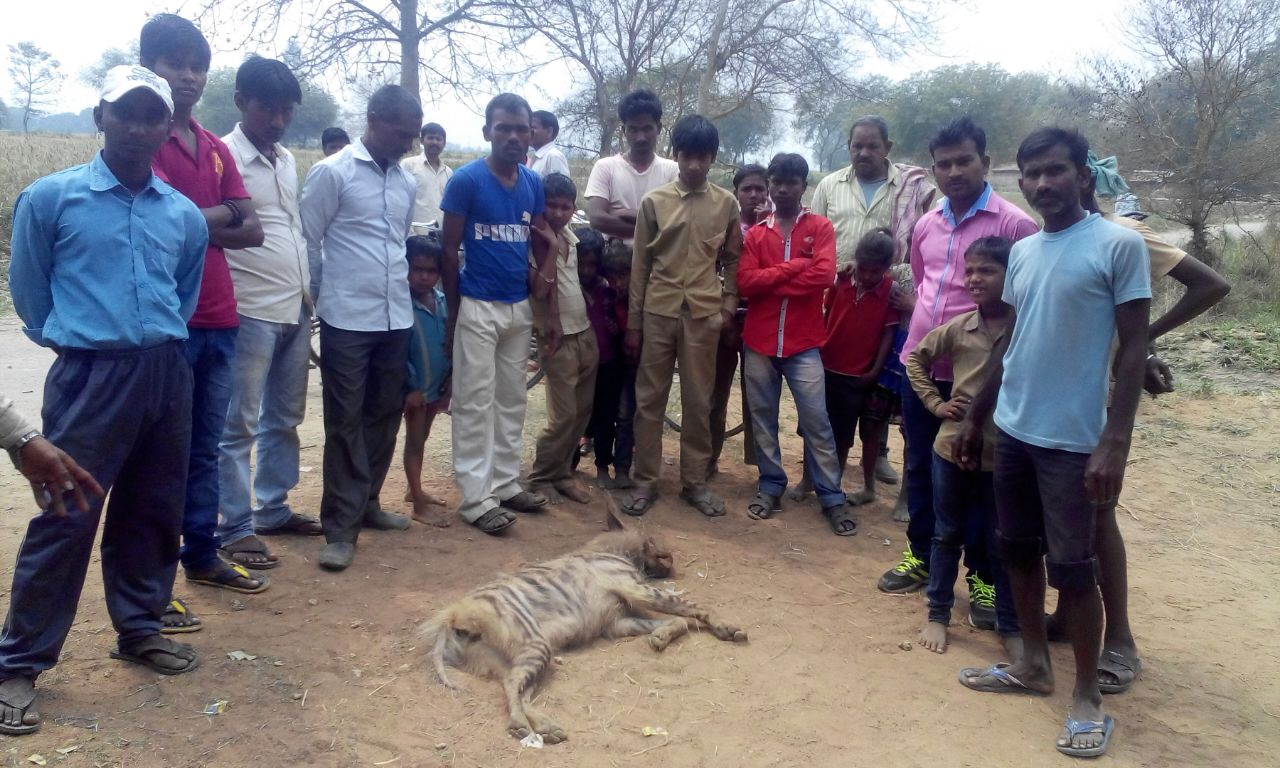 Photo: Villagers seeing the dead Hyena.