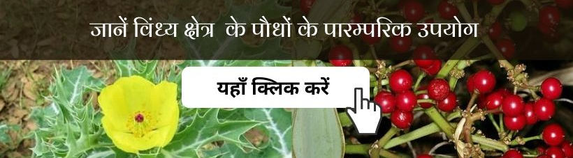 Inventory of Traditional/Medicinal Plants in Mirzapur